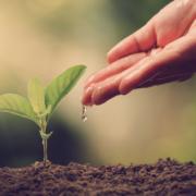 Percorsi di volontariato: Shernille vorrebbe occuparsi della tutela dell'ambiente