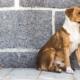 Percorsi di volontariato: Luca vorrebbe occuparsi degli animali abbandonati