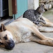 Percorsi di volontariato: Michela pensa agli anziani e agli animali abbandonati
