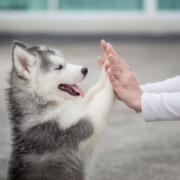 Percorsi di volontariato: Marta e il suo centro per aiutare gli animali